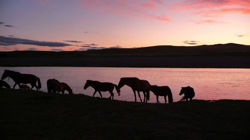 sunset horses mongolia