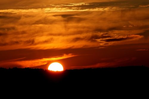 sunset horizon forest