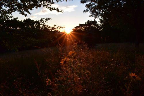 sunset warm backlighting