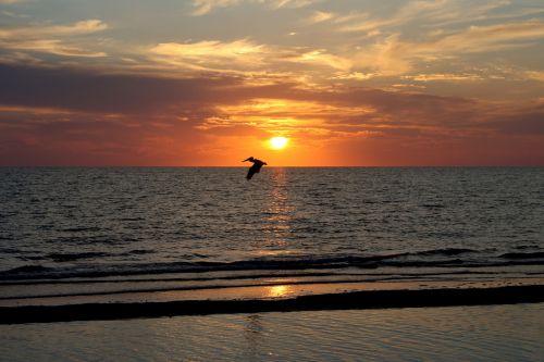 sunset florida naples