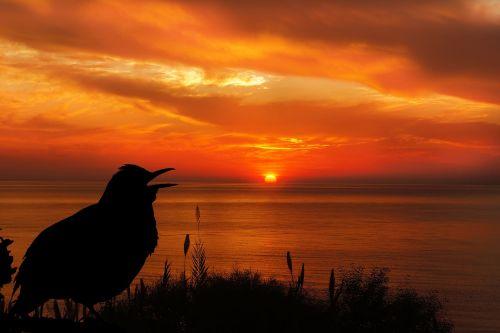 saulėlydis,paukštis,juoda paukštis,siluetas,dangus,oranžinė,juoda,gamta,gyvūnas,laukinė gamta,laukiniai,lauke,vanduo,vandenynas,saulė