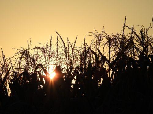 sunset autumn atmospheric