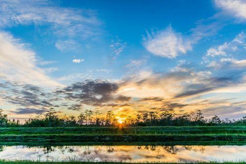 sunset everglades landscape