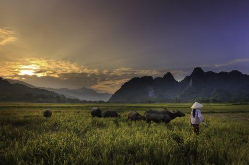sunset field twilight