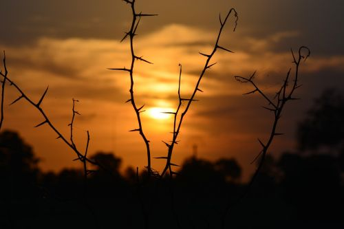 sunset silhouette sun