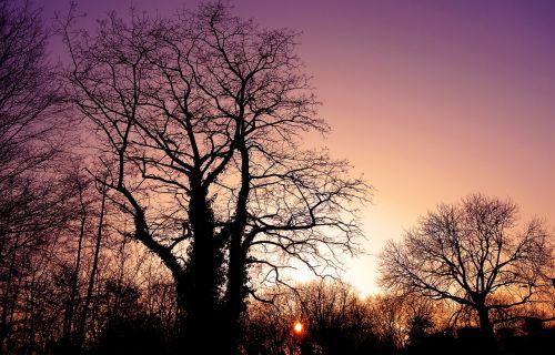 sunset sunset skies silhouette