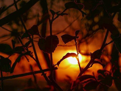 sunset  evening sun  golden light