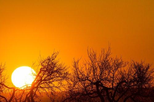 sunset  orange sky  treetops against the light
