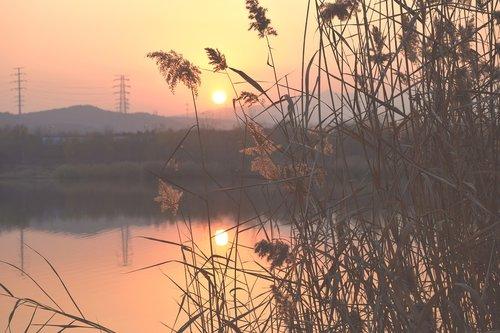 sunset  reed  riverside