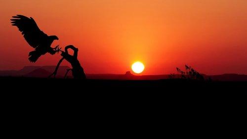 sunset  eagle  color