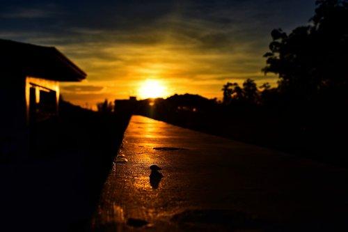 sunset  golden hour  sun