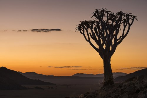 sunset  quiver tree  namibia