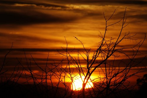 sunset  branches  backlight