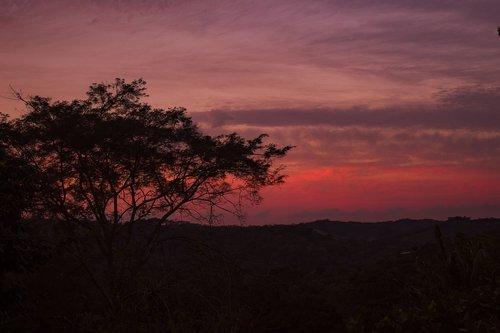 sunset  vegetation  colors