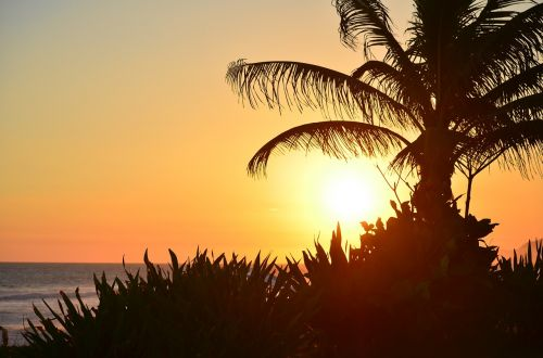 sunset beach coconut tree