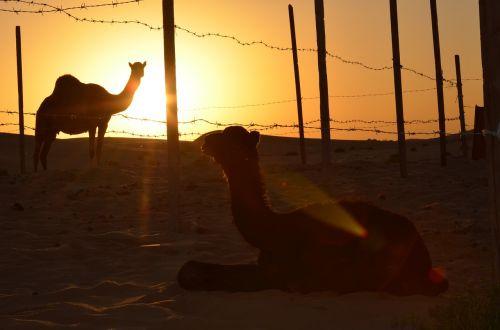 sunset desert abu dhabi