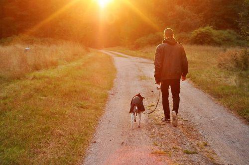 sunset dog owner