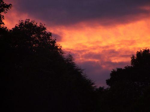 sunset dark trees