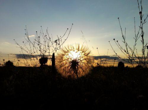 sunset field backlight