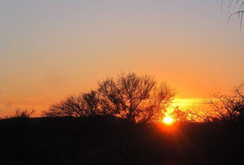 krūmas, afrika, dykuma, raudona, auksas, gyvas, saulėlydis, saulėlydis afrikoje