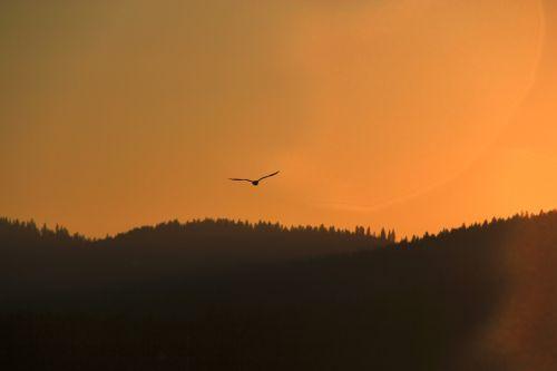 sunset mountains silhouette bird