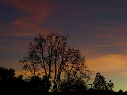 sundown,silhouette,pink,redskyatnight,tree,clouds,weather,sky,bluepink,streaked,sunset pink