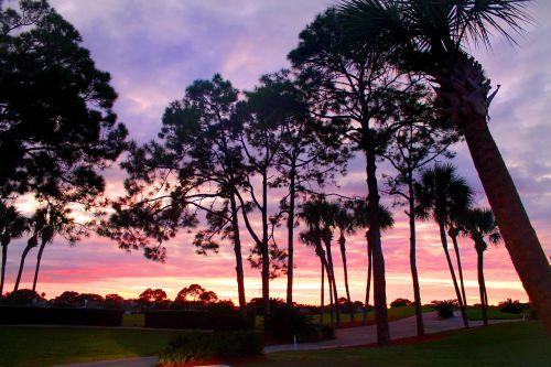 sunset through the pines sunset dusk