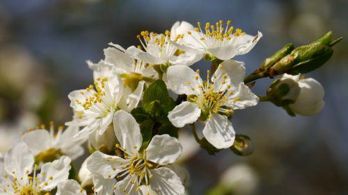 sunshine spring the spring messengers