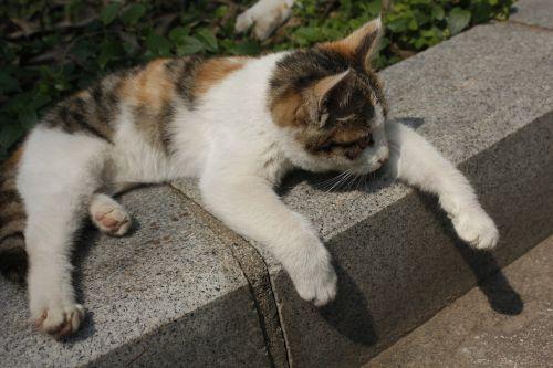 sunshine kitty paw