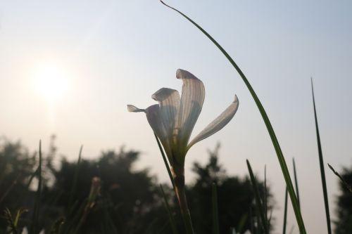 sunshine flowers strong