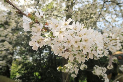sunshine vibrant plant