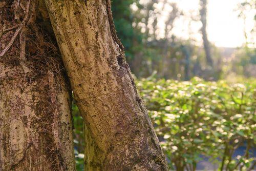 sunshine vibrant tree