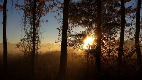 sunshine sunrise bare trees