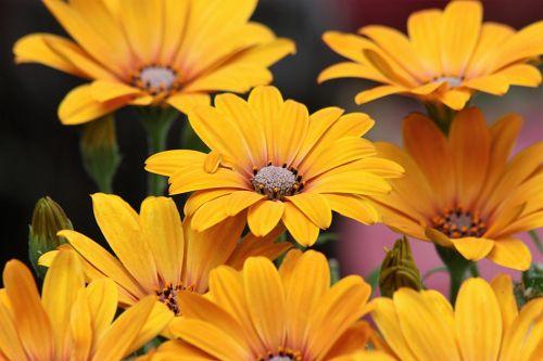 Sunshine With Petals
