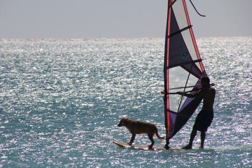 surf sport water sports