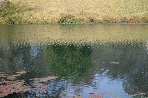 tvenkinys, vanduo, paviršius, ripples, žolė, bankas, parkas, vandens paviršius