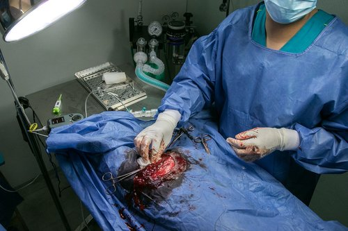 surgery  veterinary  operation