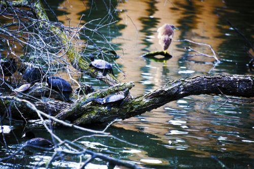 Surrealistic Turtles