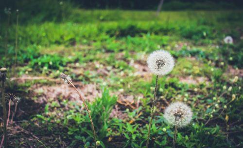 sustainability nature plants