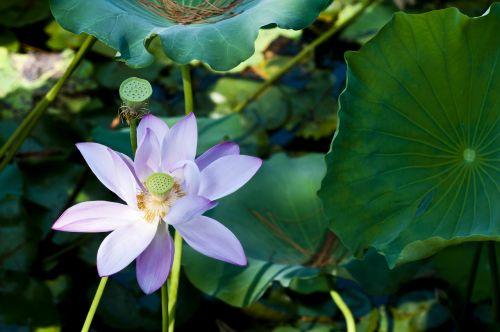 suzhou start garden hawthorn