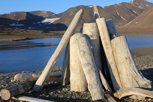 svalbard driftwood wood