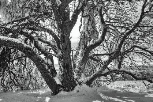 sw,žiema,sniegas,žiemą,Hochrhoen,wasserkuppe,rhön žiema,snieguotas