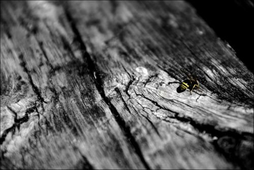 sw bee wood