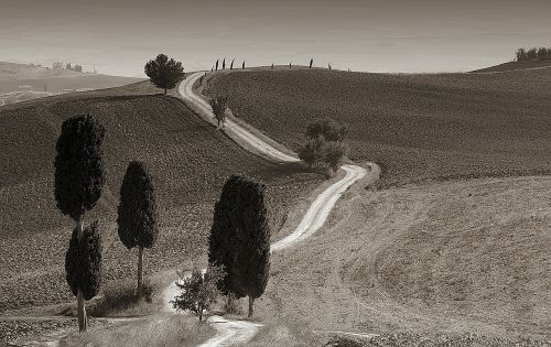 sw tuscany landscape cypress