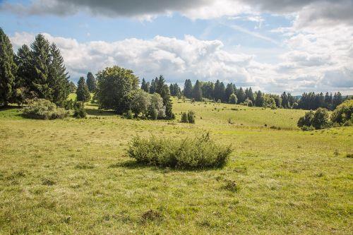 swabian alb juniper landscape