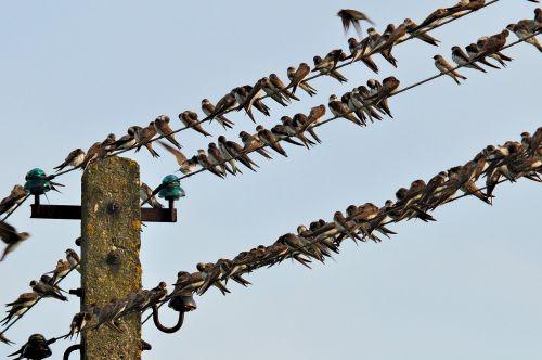 swallows meeting layout
