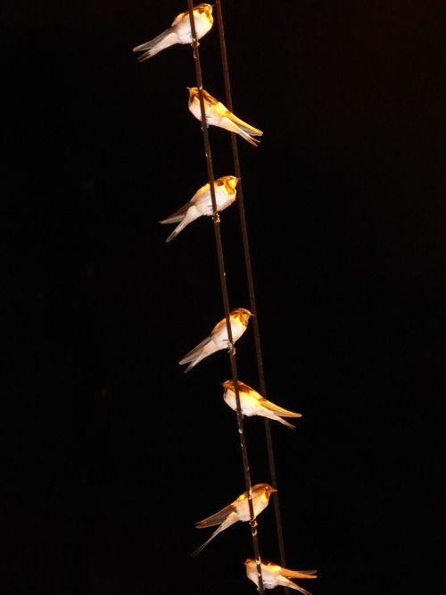 swallows hirundo rustica cables