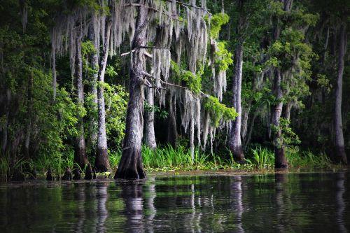 swamp bayou louisiana