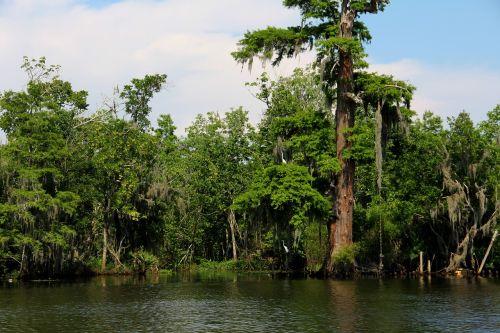 swamp bayou river