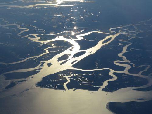 swamp florida wetland